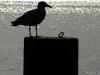 010-Early-Bird-039